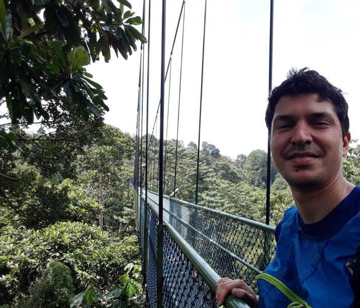 MacRitchie Trail hanging bridge