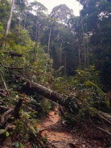 Hiking Penang Hill