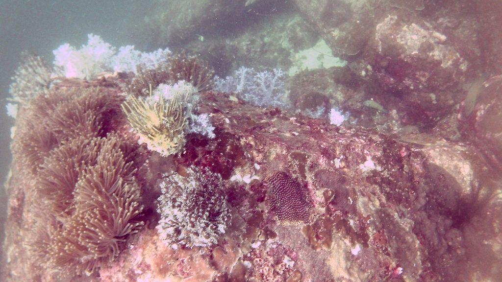 Scuba Diving Koh Lipe