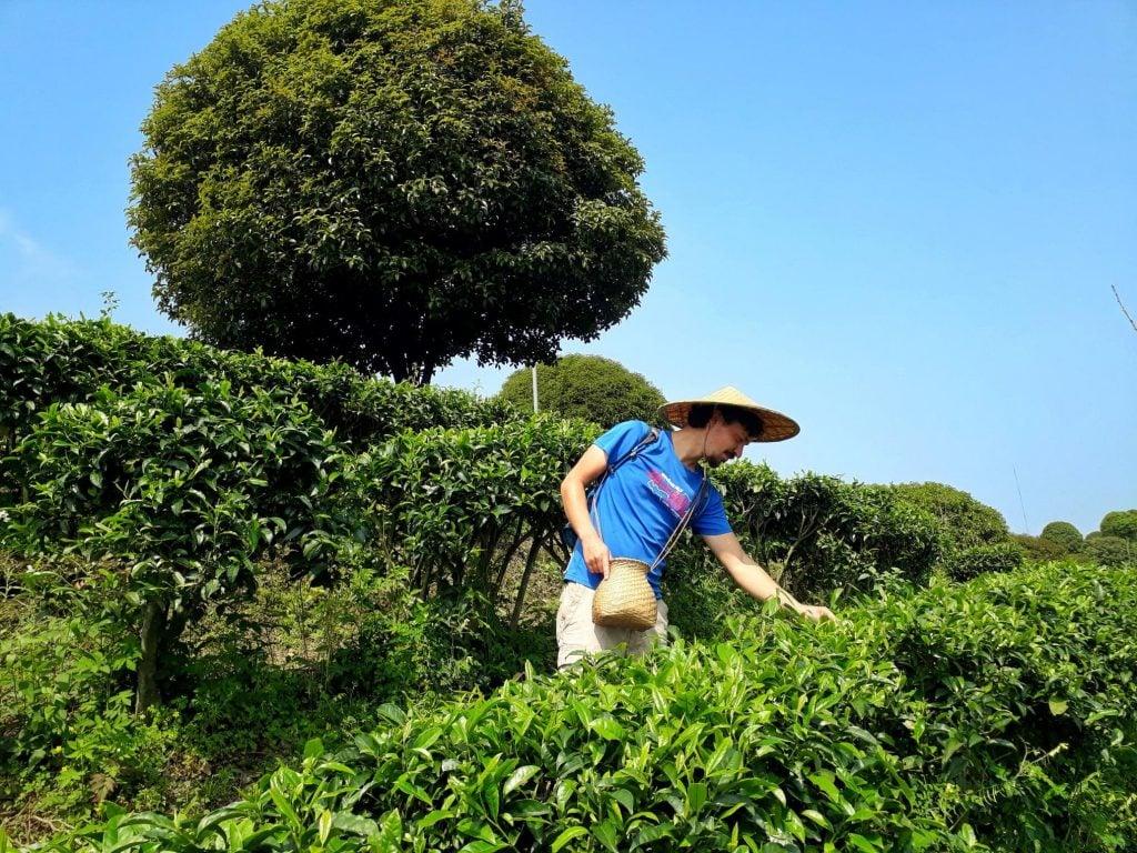 Qixianfeng Tea Plantation Yangshuo