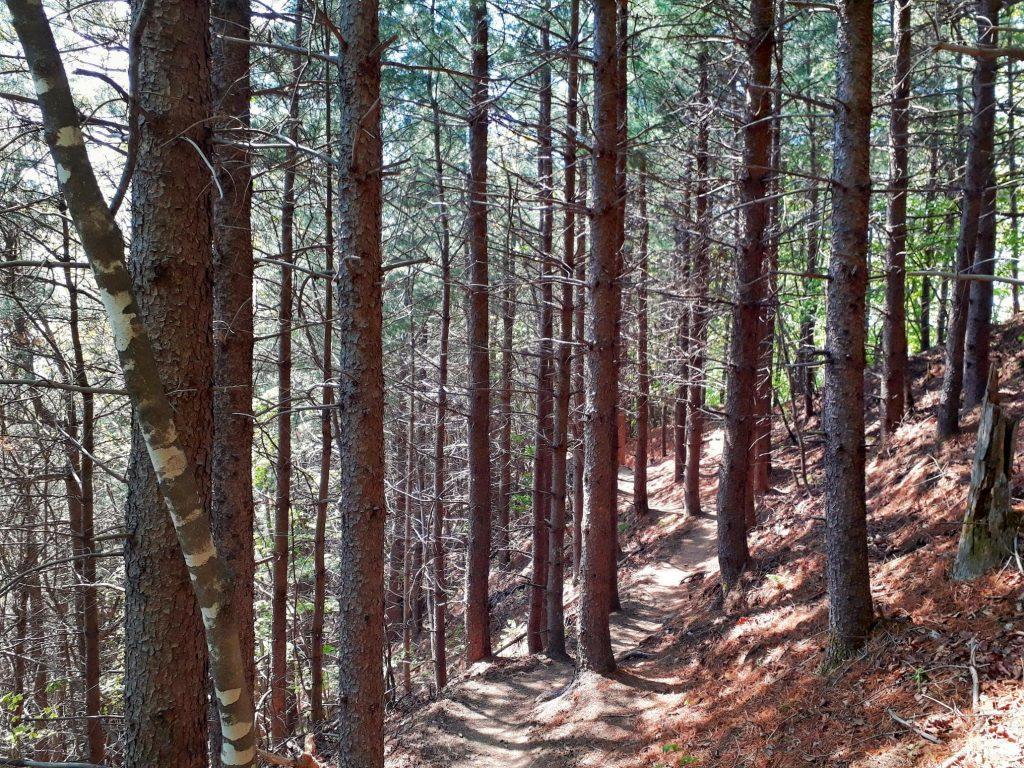 Hiking in Sobaeksan National Park