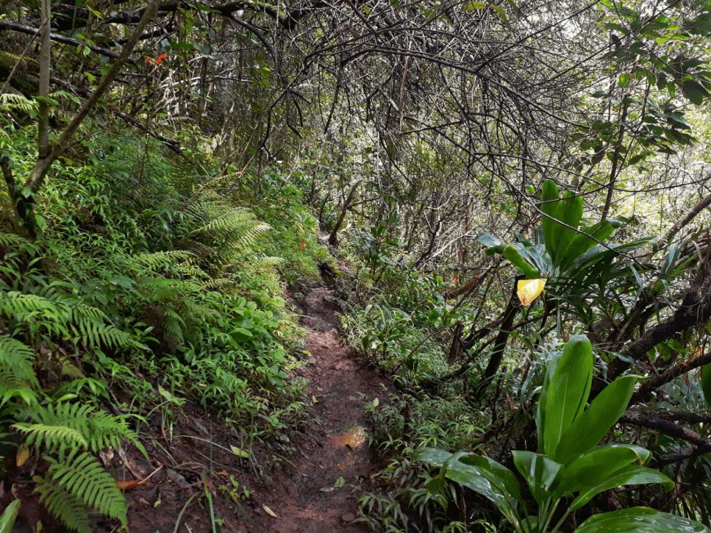 Kaau Crater trail hike