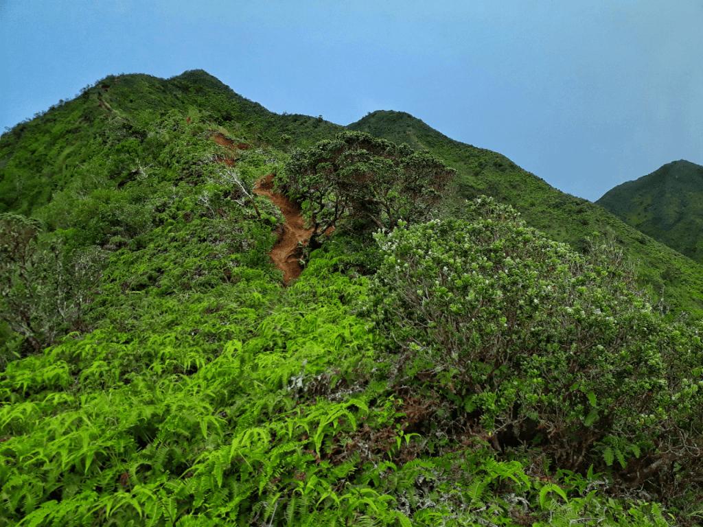 Summit of Kaau Crater Trail