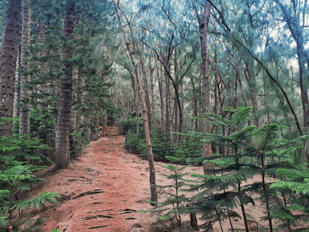 kuli'ou'ou forest trail hike