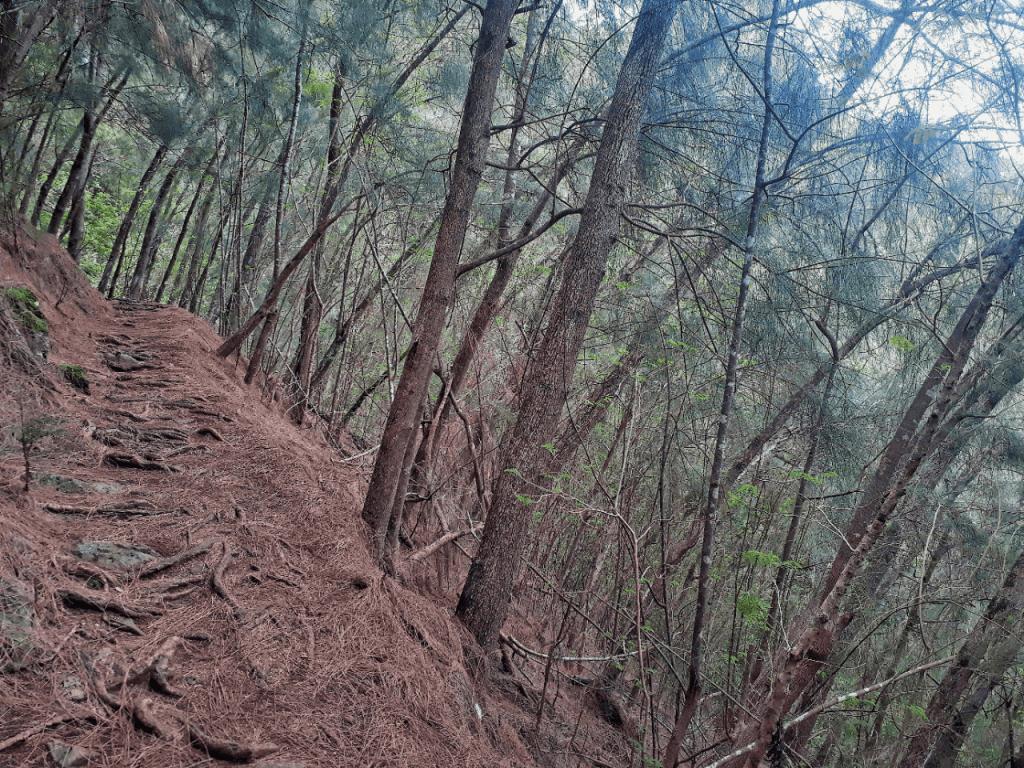 kuliouou ridge trail forest
