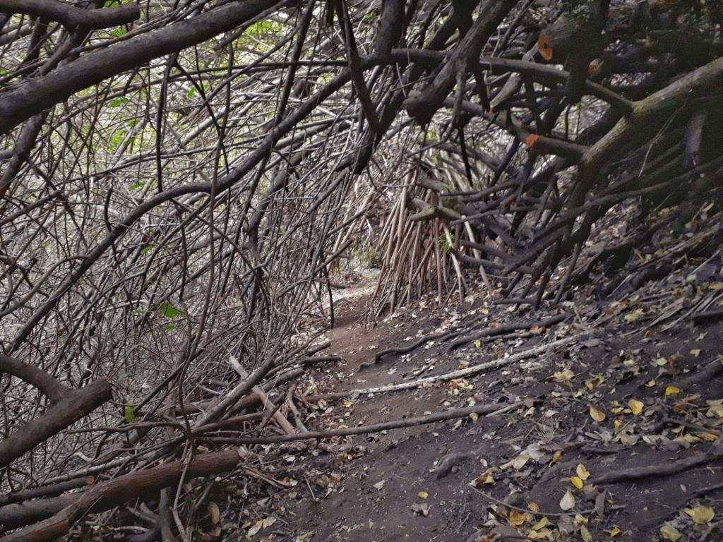 Pololu trail wood tunnel